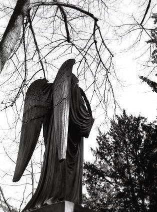 Old Tree angel 1